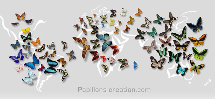 Envollée de papillons