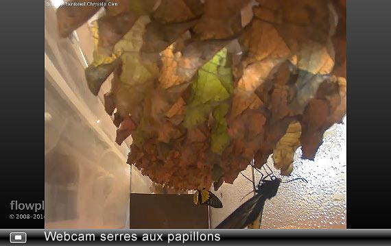 webcam serres aux papillons
