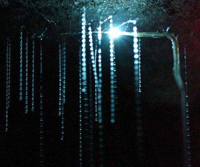 filaments lumineux