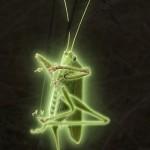 sauterelle-lumineuse-1