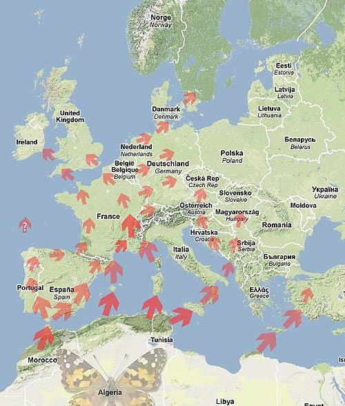 Carte des flux migratoire du Vanessa cardui