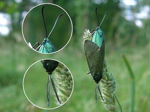 male-femelle-detail