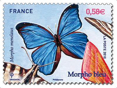 timbre morpho