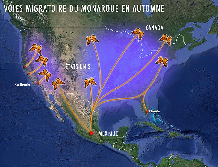 carte migration du monarque en Automne
