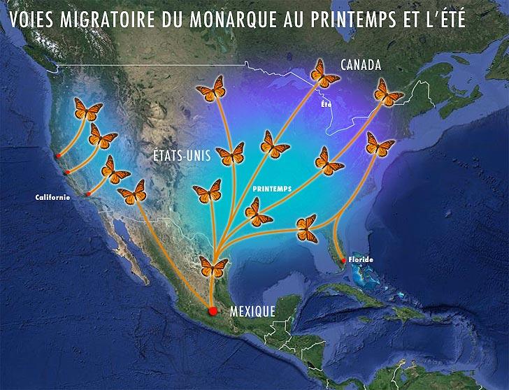 carte de migration du monarque au printemps été