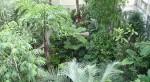 webcam canopé serre à papillons